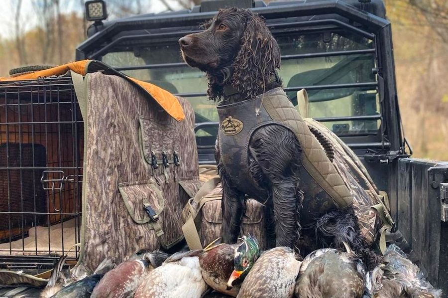 35 duck hunting