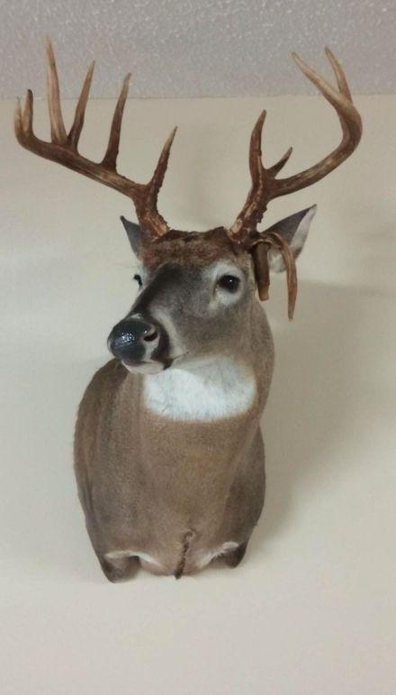 30 deer mount 1