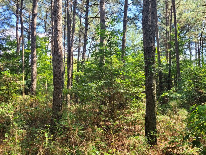7.0ac dorchester wooded