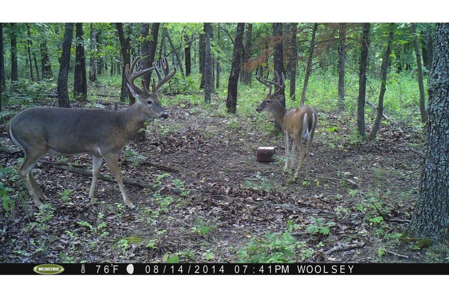 Tex 157 deer 4 copy 2