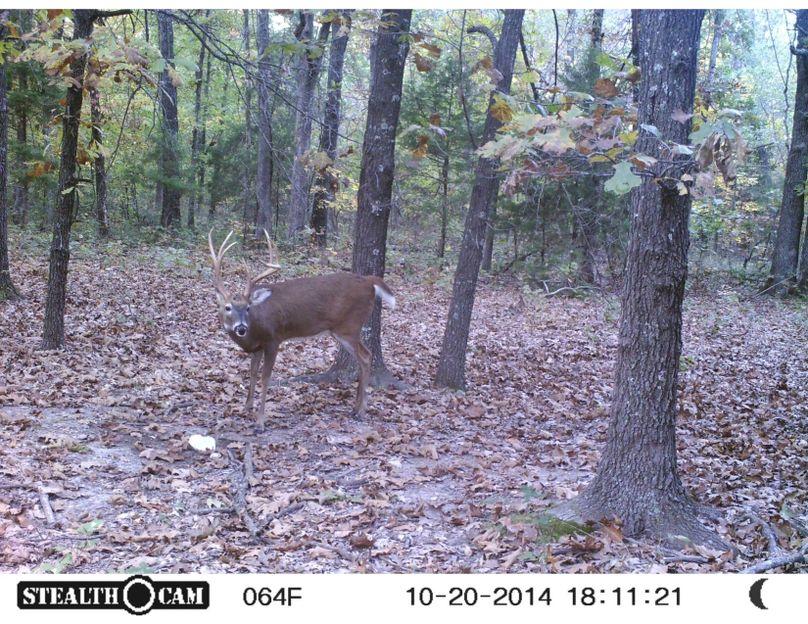 Tex 157 deer 5 copy