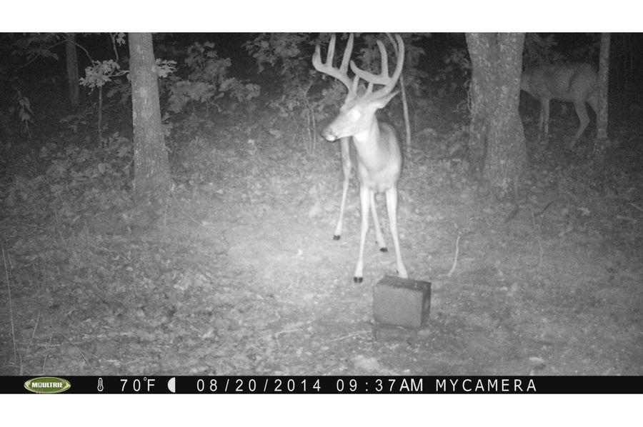 Tex 157 deer 1 copy