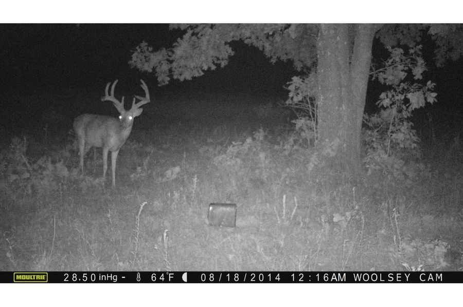 Tex 157 deer 2 copy