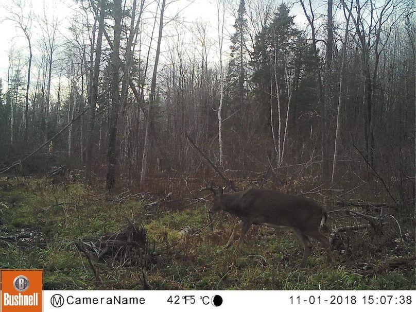 Buck 8pt2 (2)
