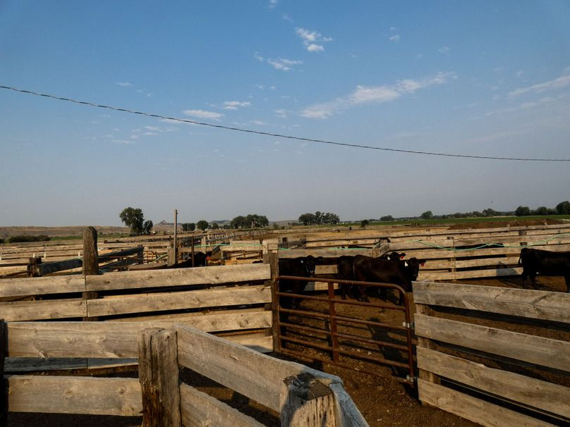 Cattle system