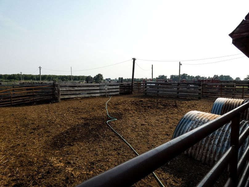 Cattlecorral