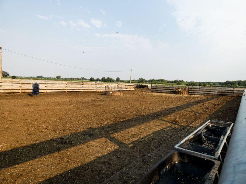 Cattlepen3