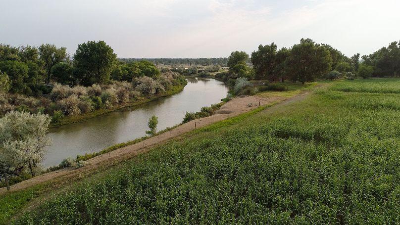 River cornfield