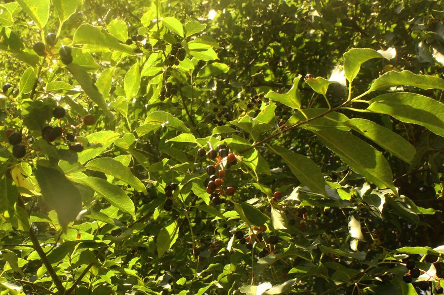 5.02ac queenanne cherrytrees 2751