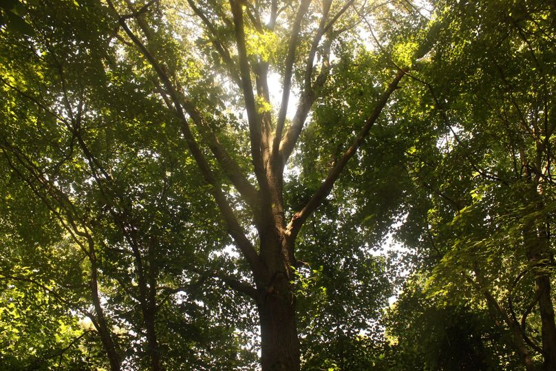 5.02ac queenanne tree02 2715