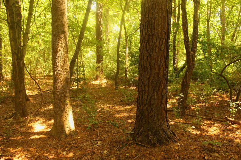 5.02ac queenanne trees01 2720