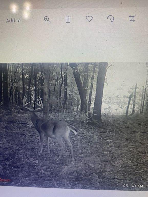 Trail cam 6