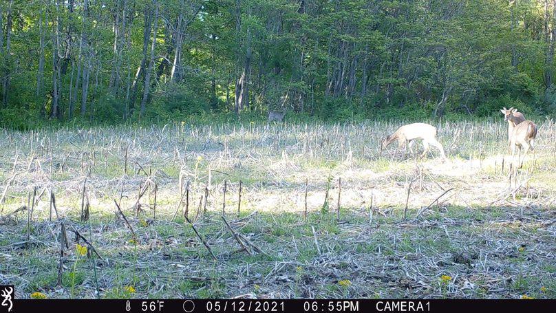 Buck.5 21.1