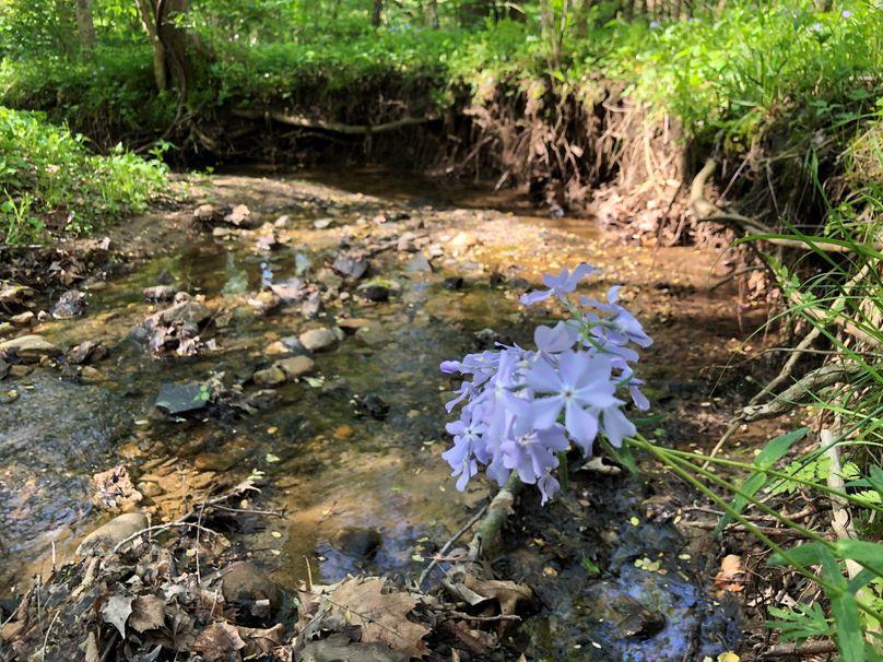 Creek.4 21.1