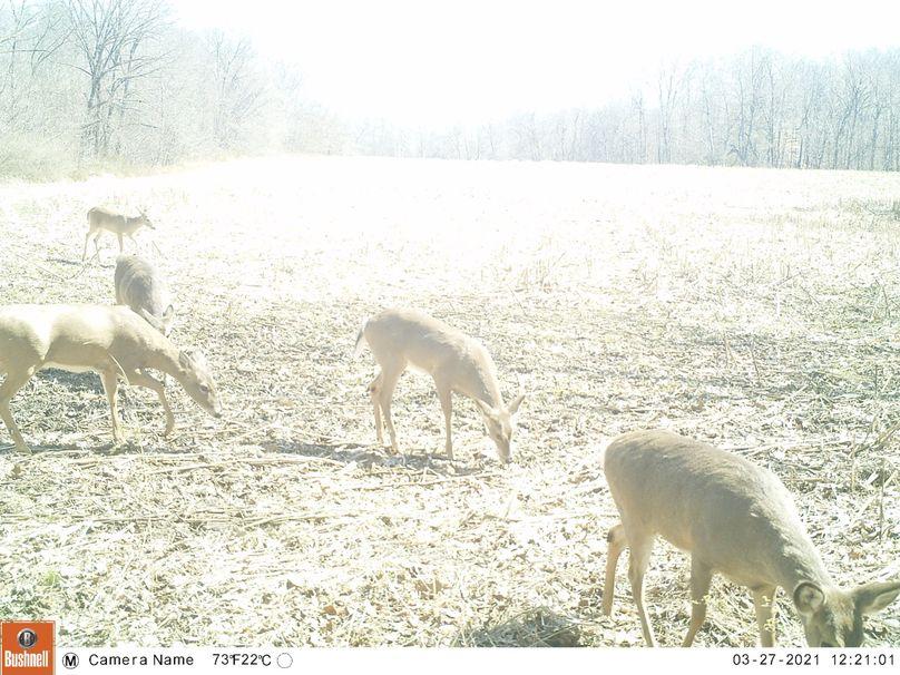 Deer.3 21.2
