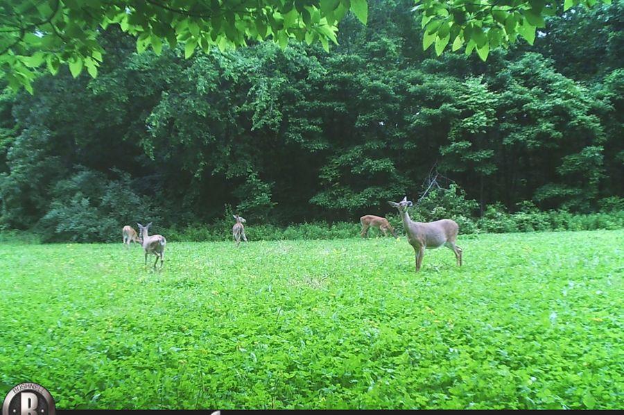 Deer.6 21.2