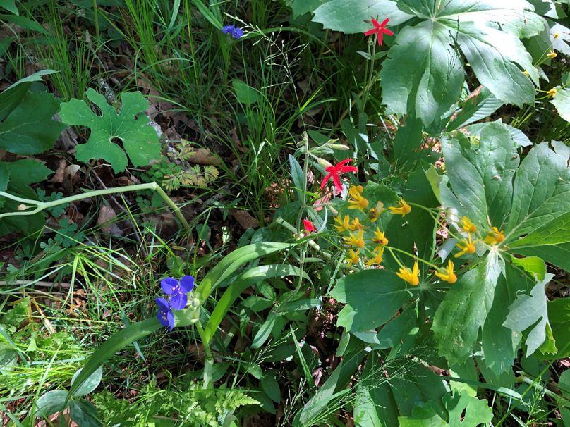 Flowers.4 21.1