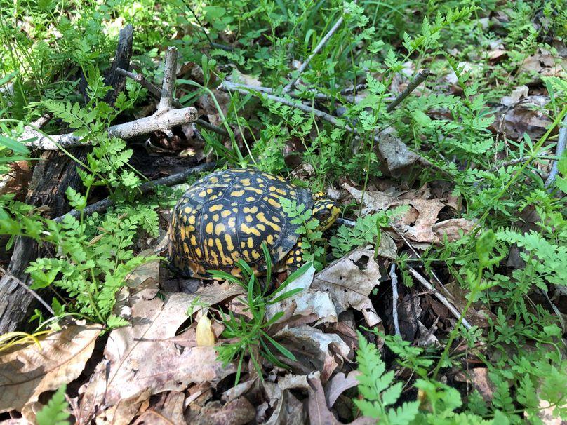 Turtle.4 21.2