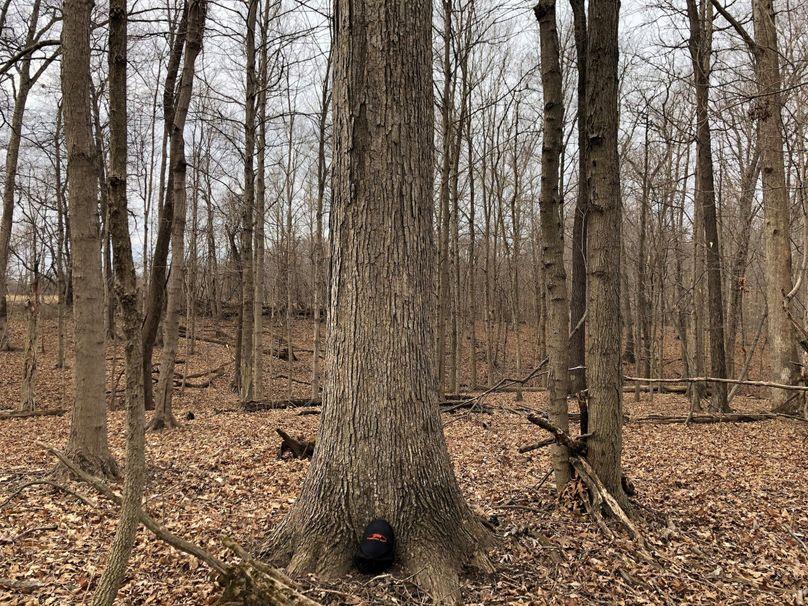 Timber.3 21.1