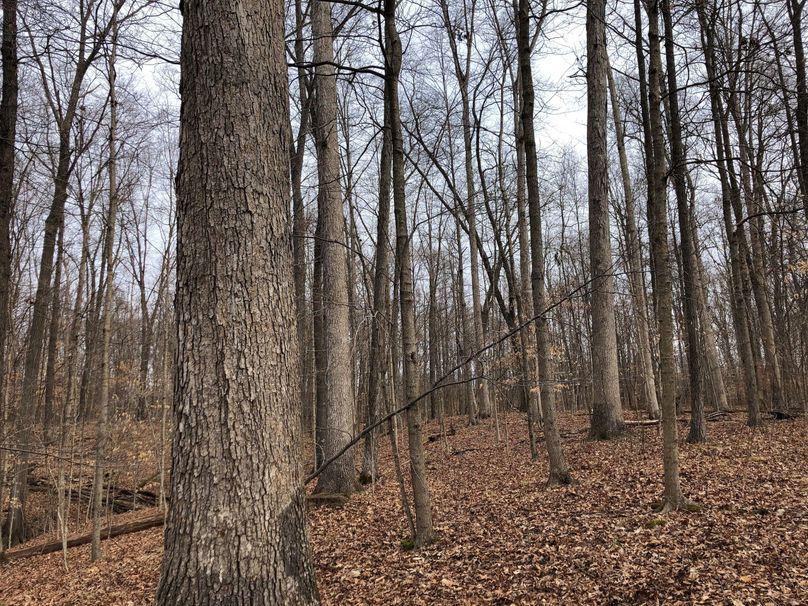 Timber.3 21.2
