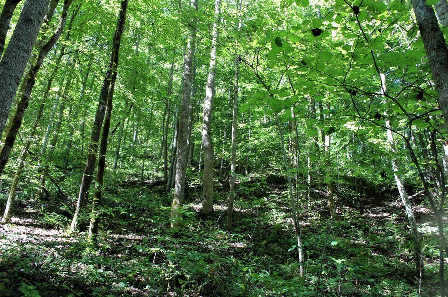 005 forested east facing slope