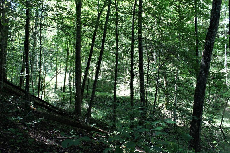 017 forested rolling ground