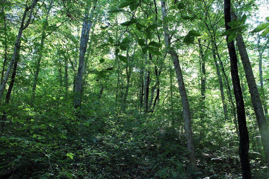 023 multi level forested hillside