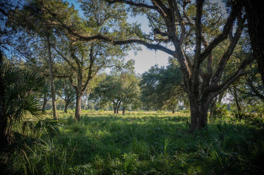 18 ranch 2 landscape1