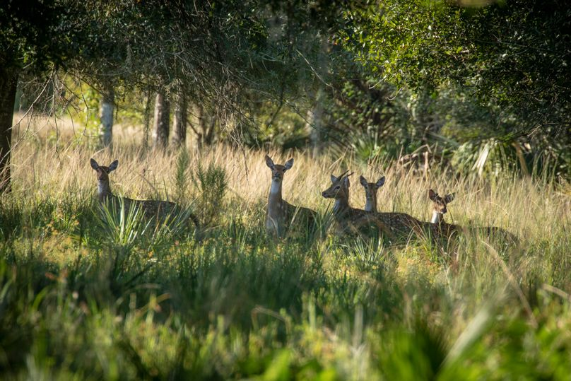 19 ranch 2 landscape12 axis deer