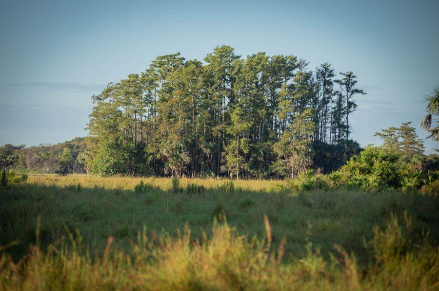 11 ranch 2 landscape a woods