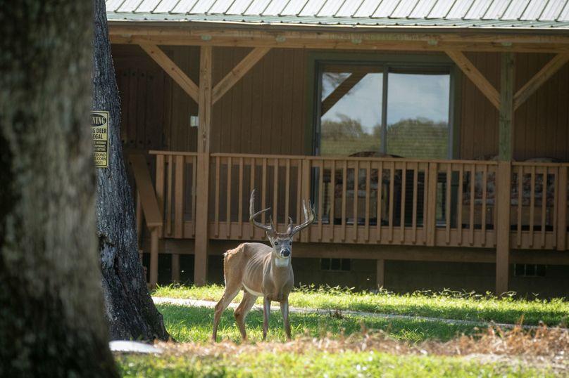 2 ranch 1a bucklodge
