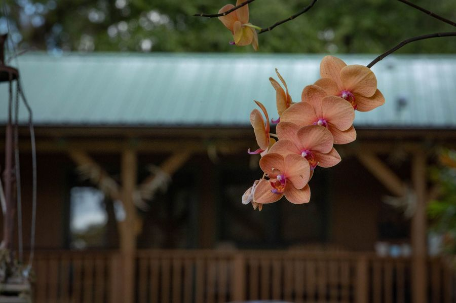 31 ranch 3 lodge orchid
