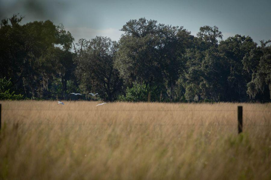 55 ranch 6 8 landscape