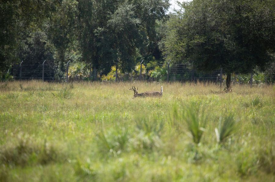 5 ranch 2 deer 2