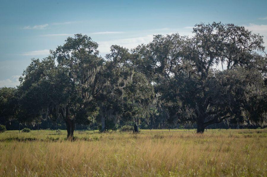 9 ranch 2 landscape 1