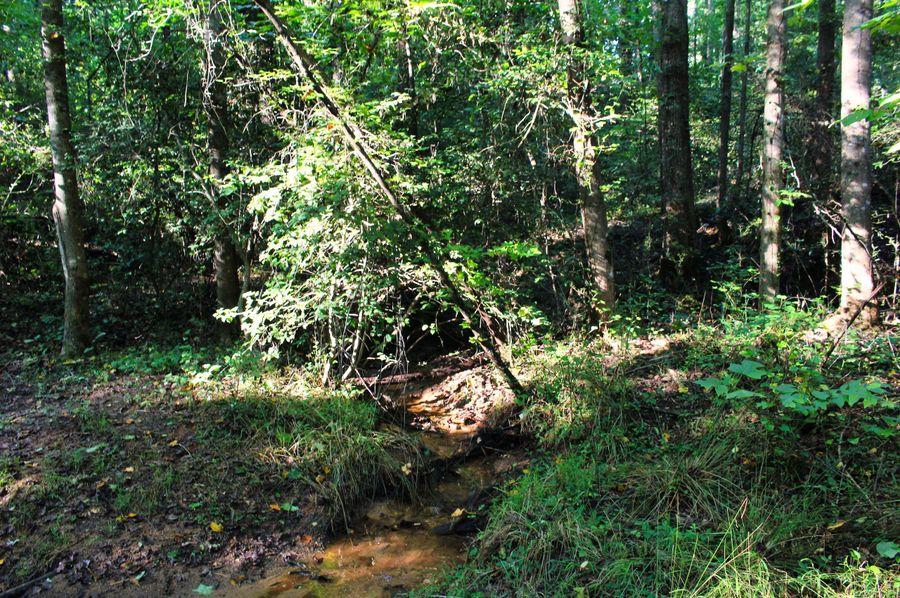 009 creek 1
