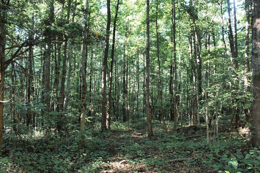 013 trail 1