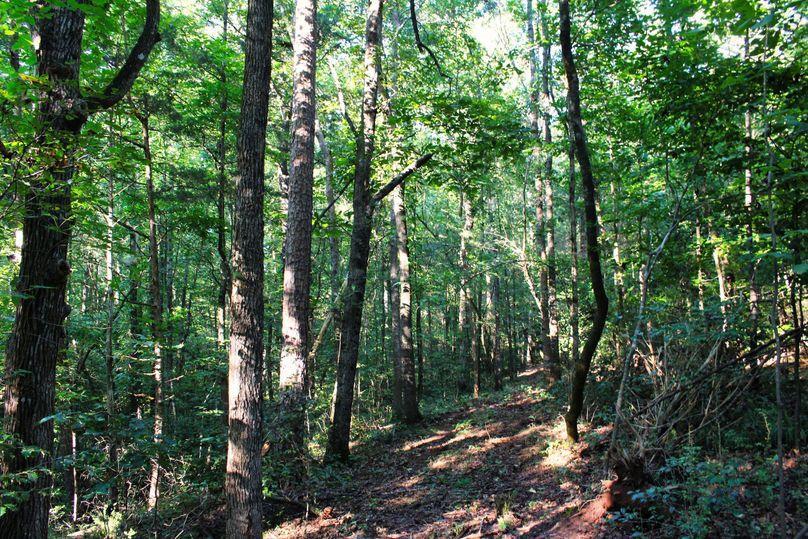 017 trail 10