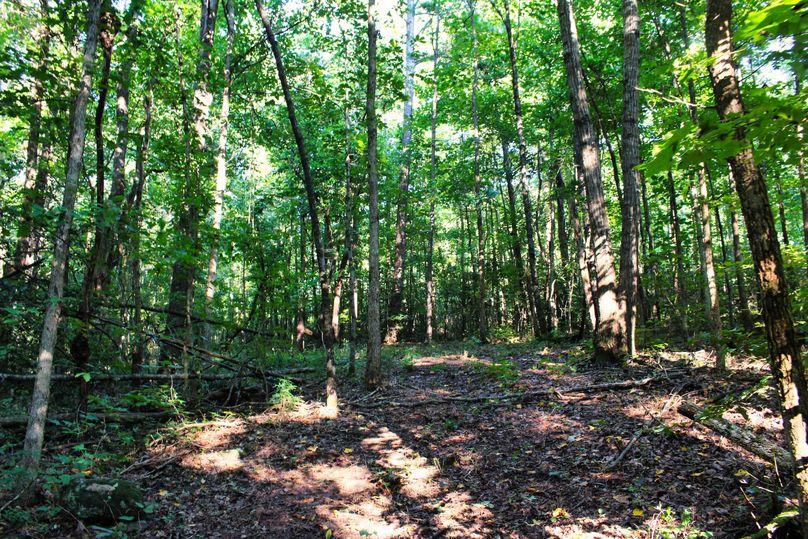 016 trail 7
