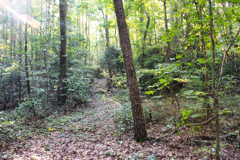 018 trail 21