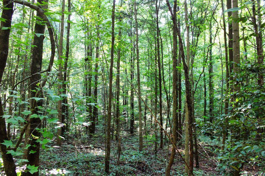 020 woods 1