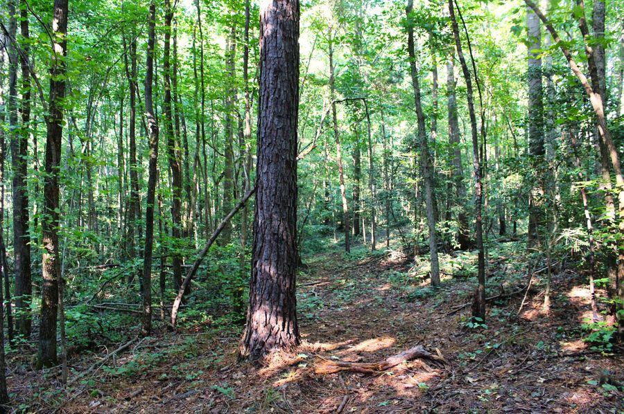 021 woods 2