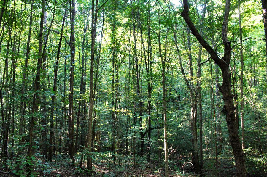 022 woods 3
