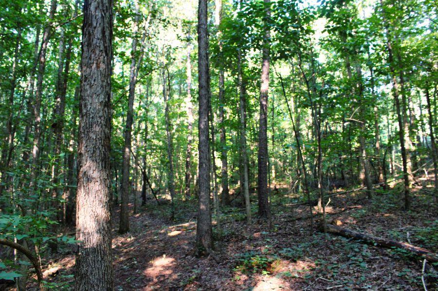 025 woods 8