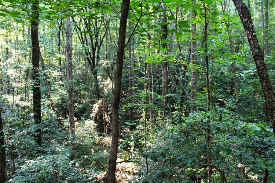 026 woods 9