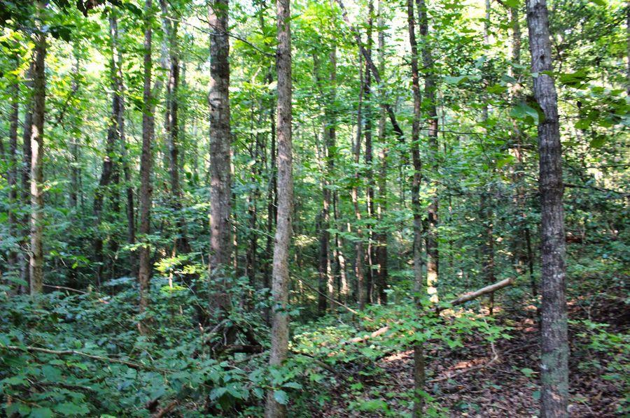 029 woods 10