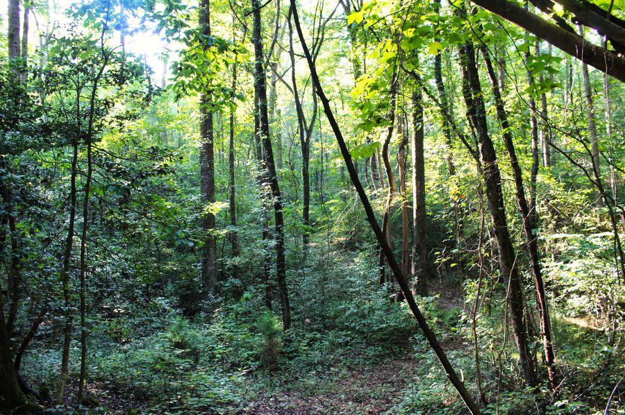 030 woods 20