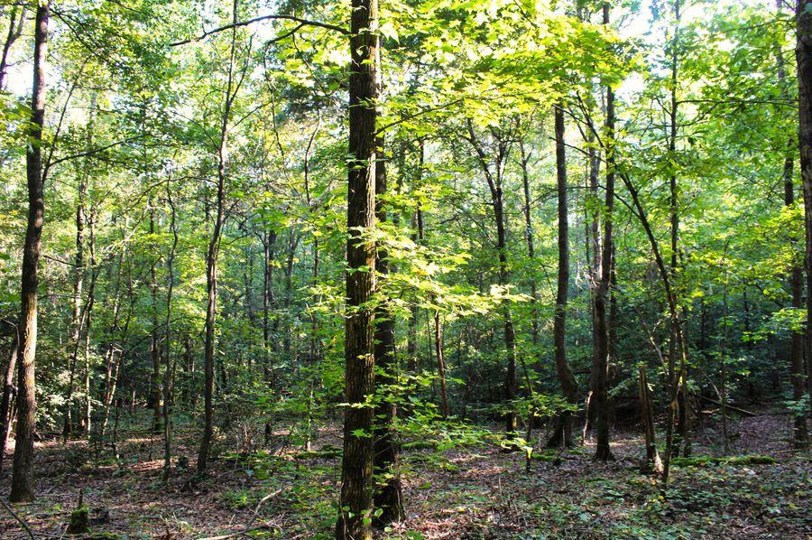 031 woods 30