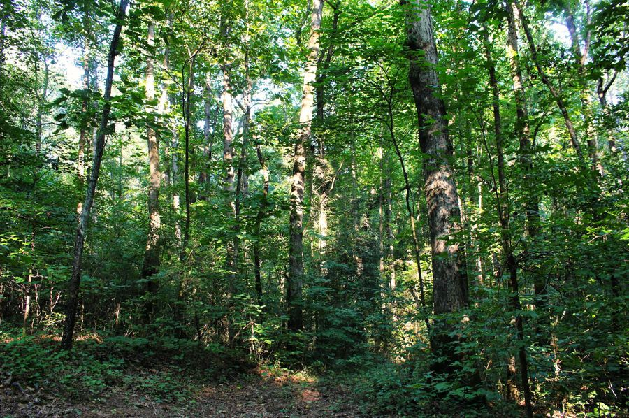 032 woods 32