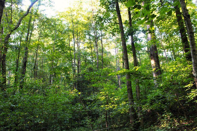 035 woods 34